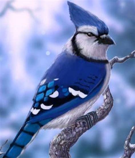 pajaros bonitos del mundo  27  | Fotos lindas | Aves ...