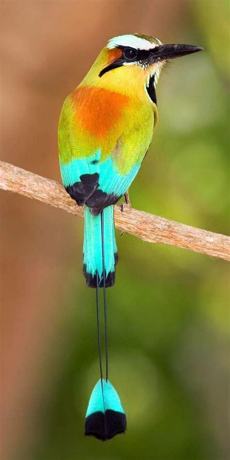 pajaros bonitos del mundo  32  | Aves, Animales y Aves ...