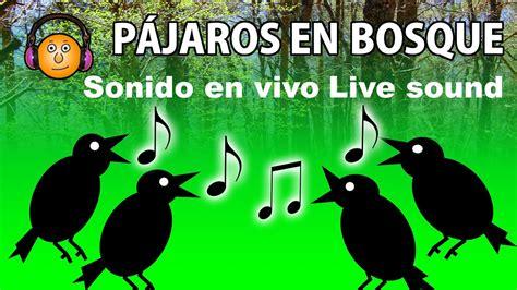 Pájaros cantando en el bosque Birds singing in the forest ...