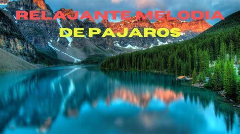 PAJAROS cantando SONIDOS de la NATURALEZA   YouTube