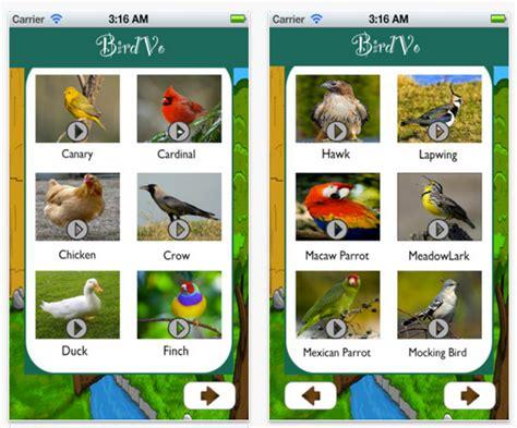 Pájaros confundidos por apps que trinan : Applicantes ...