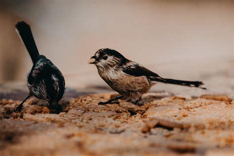 pájaros de Cantabria