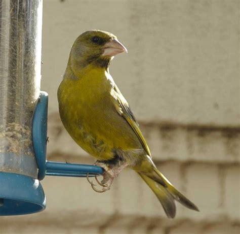 Pájaros de colores en Barcelona