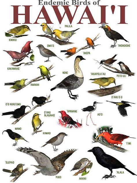Pájaros de fuego. Las aves de Hawai.