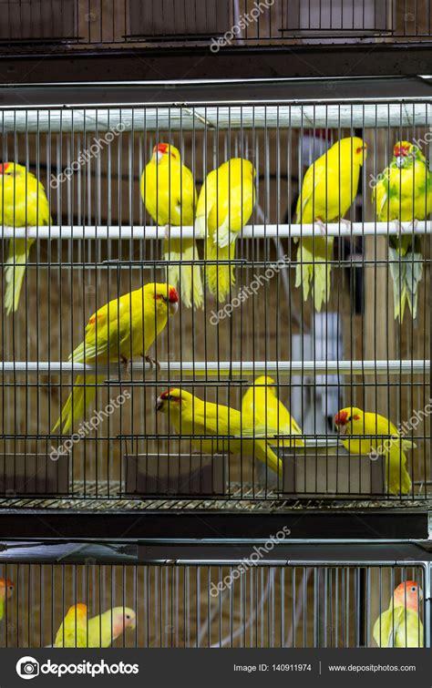 Pajaros del amor en venta   decorativos pájaros en jaula ...