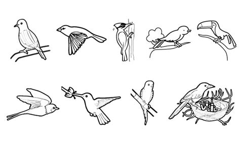 Pájaros: dibujo para colorear e imprimir