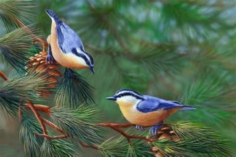 pájaros en la rama precioso canto agradable naturaleza ...