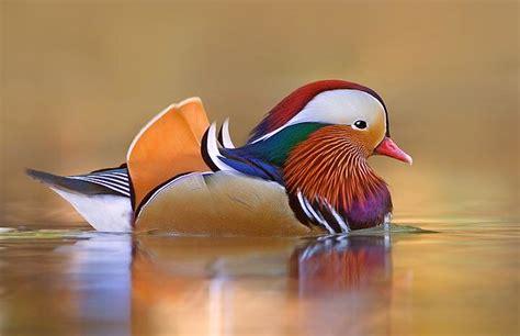 pájaros exóticos 4   Flickr   Photo Sharing!