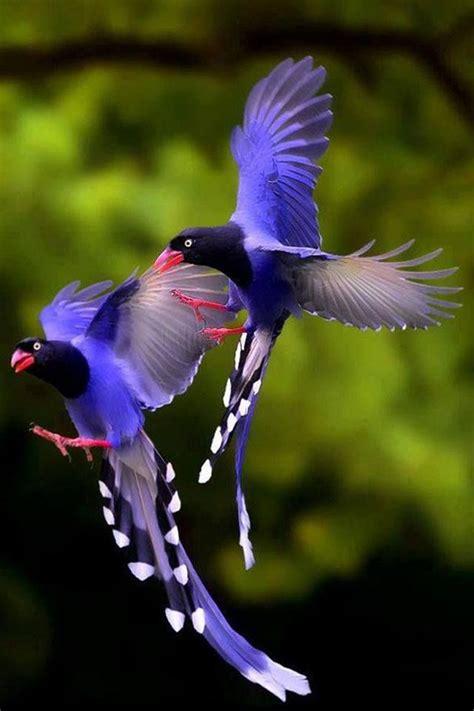 Pajaros exoticos   Aves exóticas, Aves raras y Aves