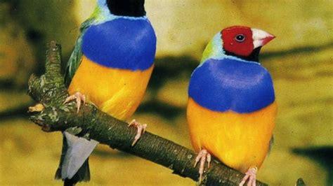 Pajaros exóticos cantando   Exotic Birds Singing   YouTube