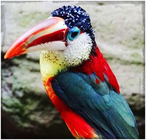 Pajaros exoticos del mundo | Aves exóticas, Aves y Aves ...