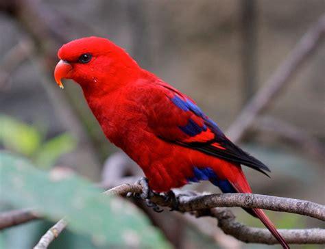 pajaros exoticos del mundo   Buscar con Google   aves ...