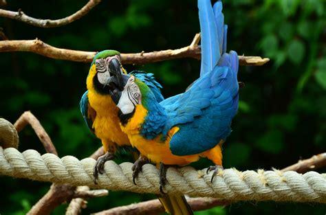 Pájaros exóticos en vulnerabilidad: los loros   Farma Higiene
