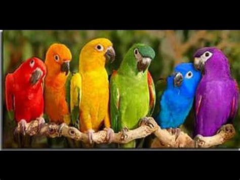 Pájaros Exóticos  Especies de Loros    YouTube