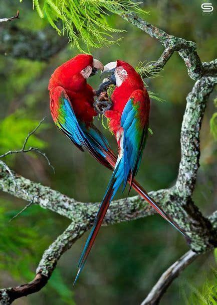 Pájaros exóticos.   Pinturas de aves, Aves exóticas ...