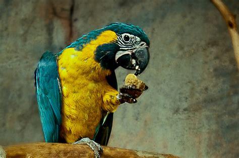 pajaros exoticos veterinario   Clínica Bahía