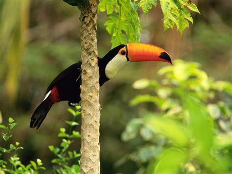 pájaros exóticos,wallpapers o fondos,aves hermosas,birds