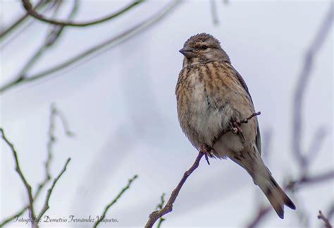 Pájaros insectívoros y cantores   5 fotografías ...