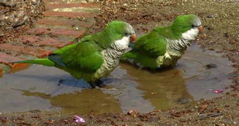 Pájaros, nuestros otros vecinos
