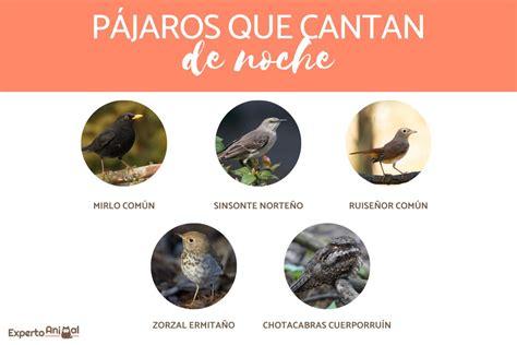 Pájaros que CANTAN DE NOCHE   Significado y ejemplos con fotos