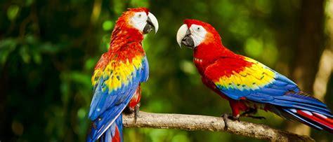 Pájaros que hablan   Bekia Mascotas