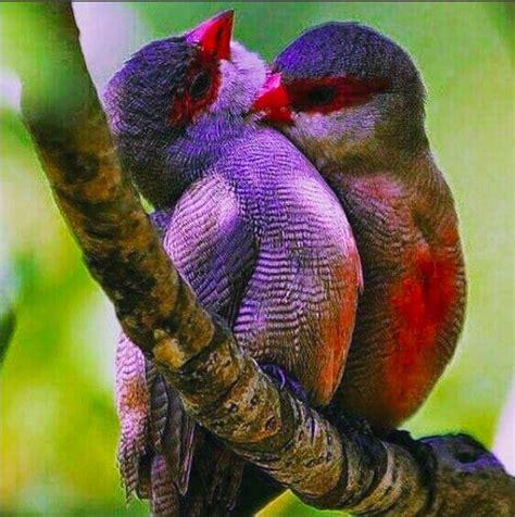 Pájaros tan extraordinarios que parecen de otro planeta ...