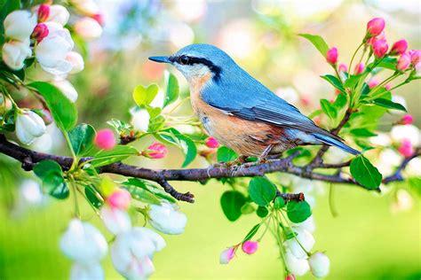 Pájaros   Vive la Naturaleza
