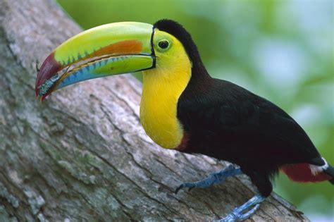 Pajaros,aves exoticas,raras de todo tipo y colores,rapaces ...