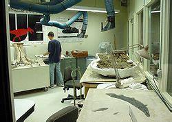 Paleontología de dinosaurios   Wikipedia, la enciclopedia ...
