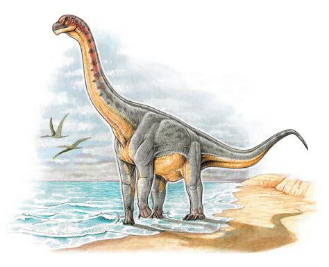 Paleontología en Colombia: Padillasaurus leivaensis, un ...