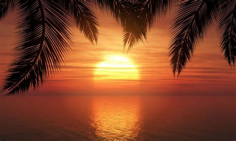 Palm trees against sunset sky   Download Free Vector Art ...