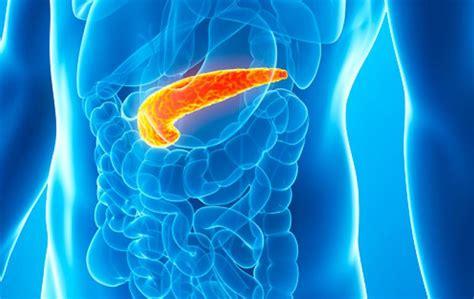 Páncreas : noticias y artículos