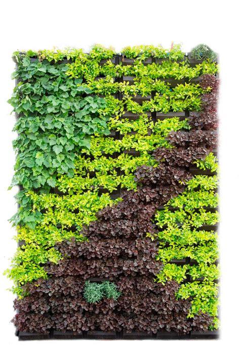 Panel Muros Verdes Natural   $ 1,740.00 en Mercado Libre