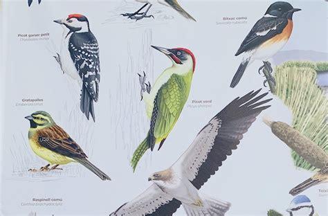 Paneles informativos sobre los pájaros que anidan y ...