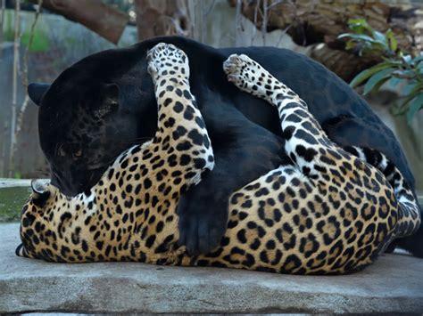 Parc Zoologique de Paris   Zoo de Vincennes   Parcs ...