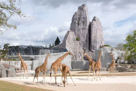 Parc zoologique de Paris  zoo de Vincennes  – 08/04/2014 ...