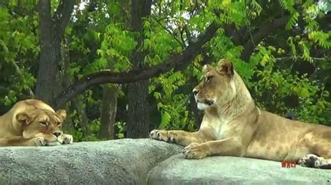 Parc Zoologique de Paris   Zoo de Vincennes / Zoological ...