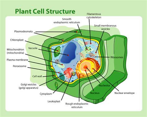 Pared celular Estructura y función   Educándose En Linea