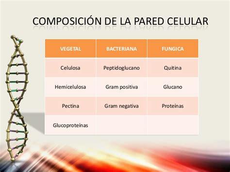 Pared celular y Pared Fungica