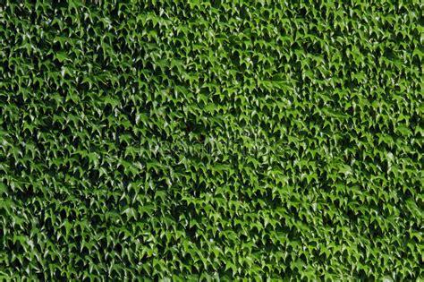 Pared verde foto de archivo. Imagen de camilla, planta ...