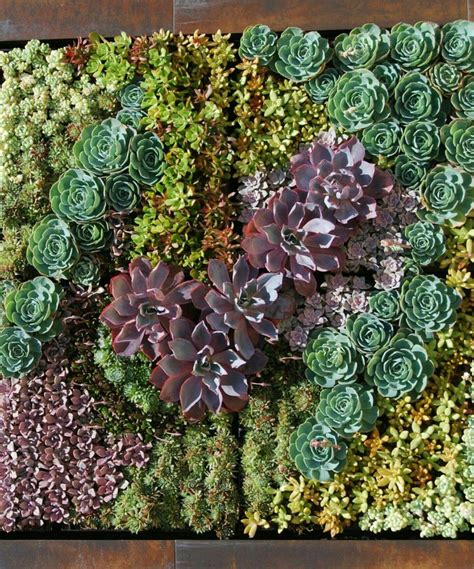 Paredes de suculentas como obras de arte   Succulent ...