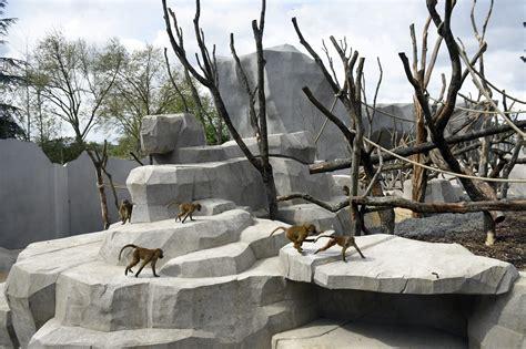 Paris zoo baboons escape enclosure prompting evacuation of ...