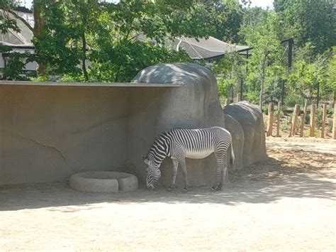 PARIS ZOO … FANTASTIC …   The Website Of Author Marilyn Z ...
