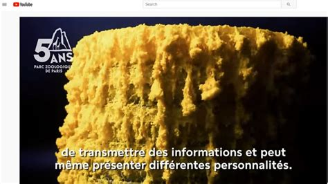 Paris zoo to debut  The Blob  organism with 720 sexes ...
