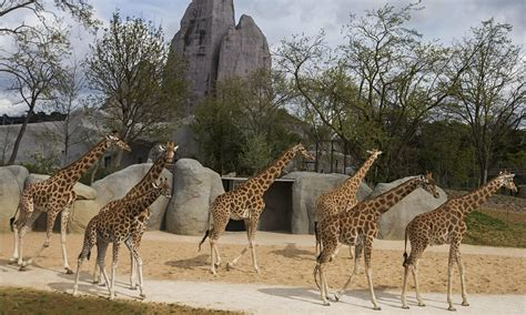 Paris zoo to reopen after a €133m revamp and Grand Rocher ...