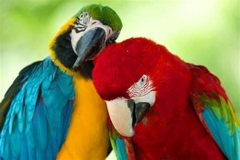 Parleras | Nombres de animales, Familias de animales, Animales