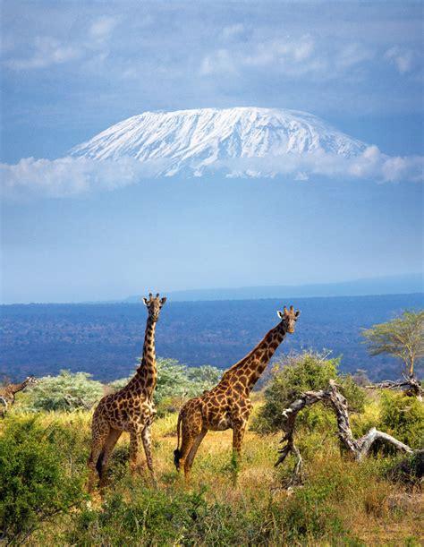 Parque Nacional Amboseli, Kenia.   Parques naturales ...