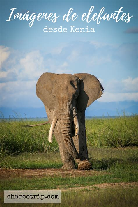 Parque Nacional Amboseli o el paraíso de los Elefantes en ...