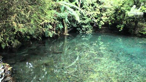 Parque Nacional Barranca del Cupatitzio   YouTube