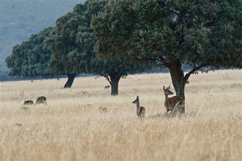 Parque nacional de Cabañeros   Biodiversidad y geología ...